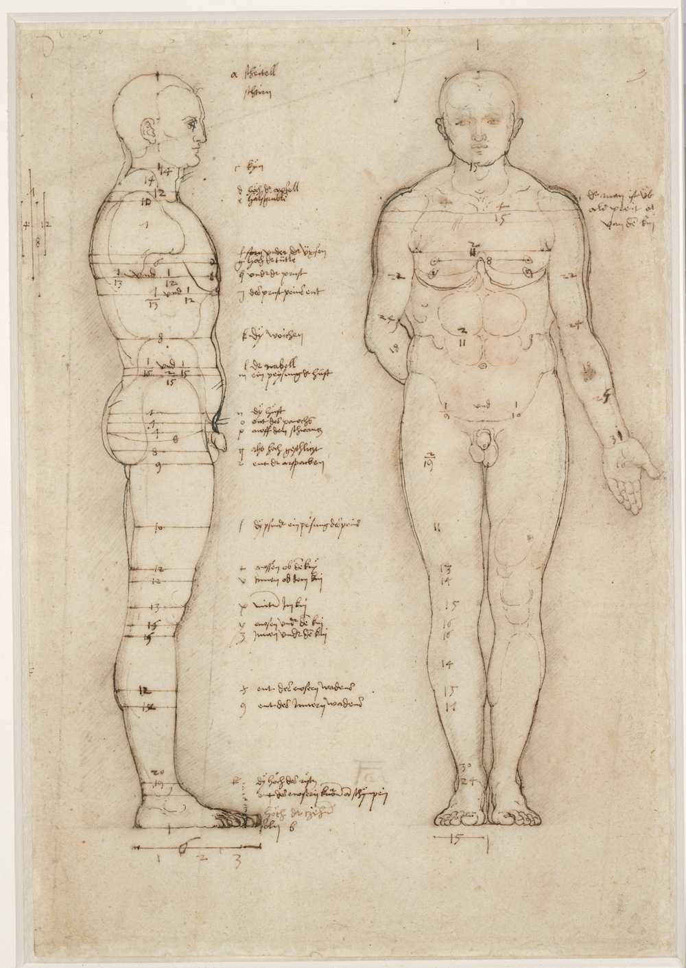 Albrecht Dürer's Sketches on Human Proportions