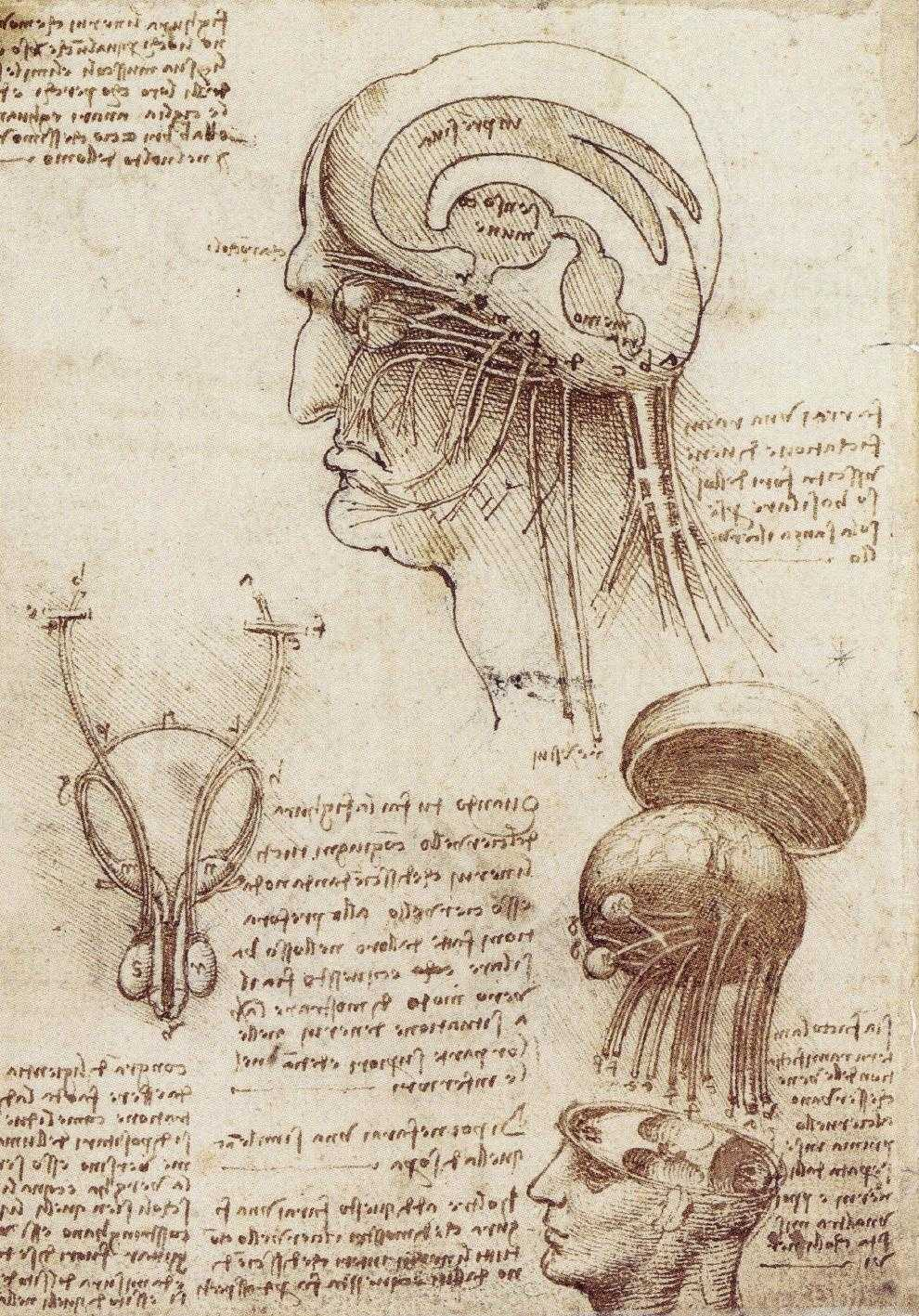 Leonardo's sketch of the human brain